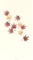 japanese_maple_wallpaper_japanese_color_tmb