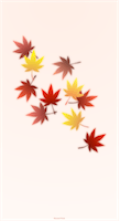 japanese_maple_wallpaper_tmb